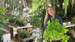 Indoor Plant Care:  Join Me on My Daily Routine!