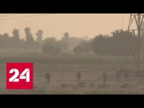 Сирия: террористы ИГИЛ