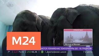 """Слонятам из Мьянмы в """"Уголке дедушки Дурова"""" дали имена - Москва 24"""