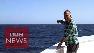 Blue whale's perfect timing to upstage TV presenter - BBC News