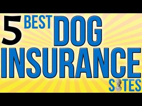 5 Best Dog Insurance Sites