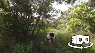 Perros en realidad virtual   Episodio #127