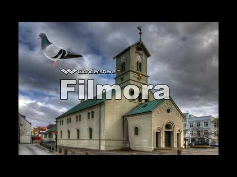 Iceland - Pigeon