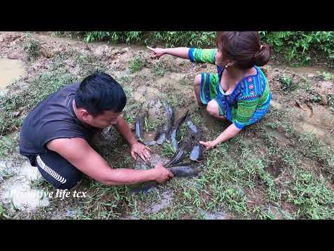 Survival Skills - Primitive Life: Catch Catfish Swimming Upstream In The Field