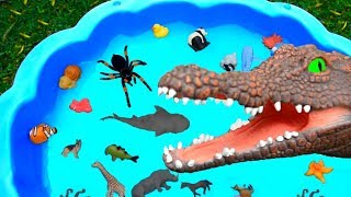 Learn Colors With Wild Animals and Shark Toys in Blue Water Tub Toys For Kids