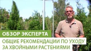 видео Елка уличная виды посадка и уход