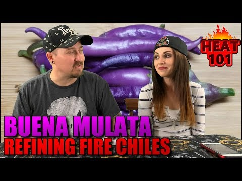 Buena Mulata Pepper From Refining Fire Chiles!