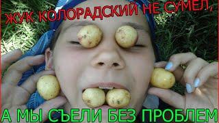 """Лайфхак с молодой картошкой """"чери"""" на костре от Кулинарпро"""