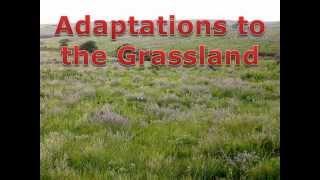 Grassland Adaptations
