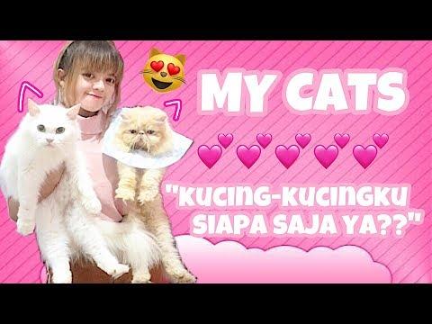 KENALAN YUK ! KUCINGKUCINGKU ADA BERAPA YA ? BONEKA HIDUP KUCING LUCU  C CAT FAMILY