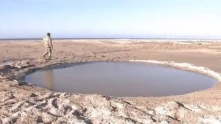 видео Щит из ольхи