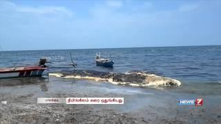 Rotting dead whale washes up in Pudukkottai beach | Tamil Nadu | News7 Tamil