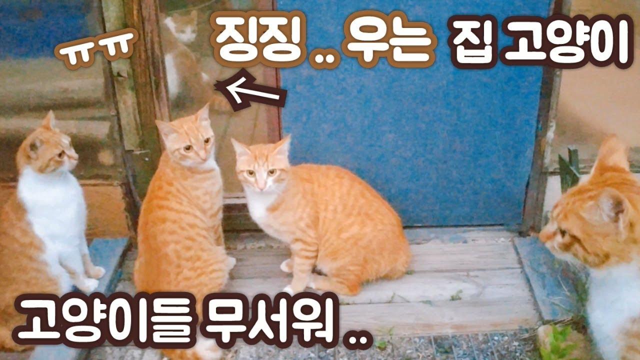 42화- 마당냥들과 대치 후 앓아 누운 집고양이, 고양이가 얼음이 되는 이유, 찐감자 오래 보관하는 법, 수세미 뜨기, 고양이식당