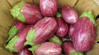 Eggplant Nutrition Facts - Different Types Of Eggplants