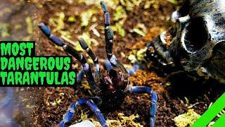 Top 10 Most DEFENSIVE Tarantulas! DON'T BE SCARED