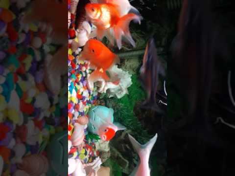 Aquarium crazy