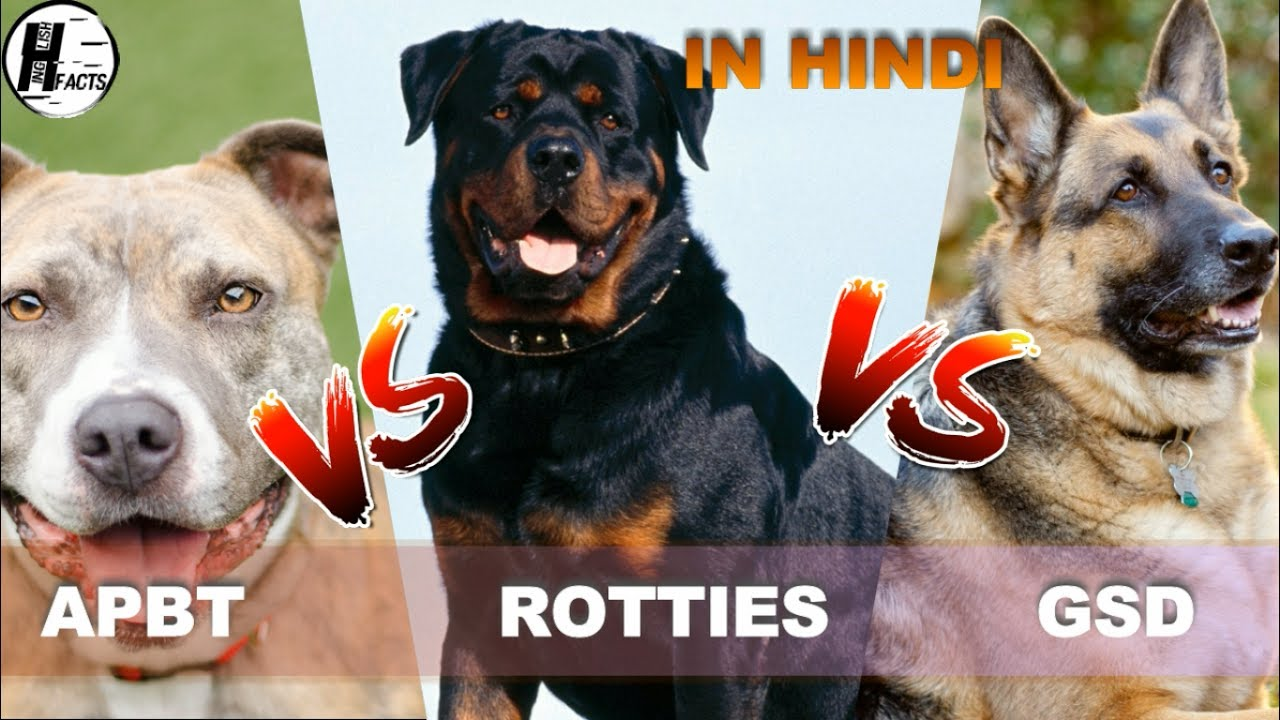 domestic dog in hindi Wild animals live without direct influence from the human whereas domestic animals live under the care of and the dogs have been useful for protection, and.