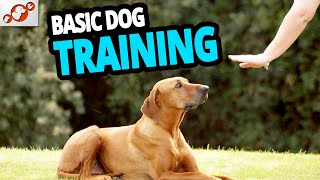 Basic Dog Training – TOP 10 Essential Commands Every Dog Should Know!
