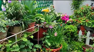 June Overview ll terrace garden ll MYLILGARDEN ☘️