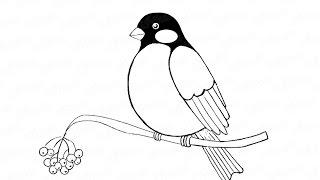 Как нарисовать птицу снегиря на ветке: инструкция от EvriKak(Предлагаем нашу пошаговую инструкцию как рисовать снегиря на ветке рябины.Фото и текстовая инструкция..., 2015-11-20T11:24:17.000Z)