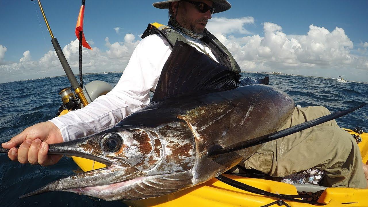 Deep blue kayak fishing charters sailfish tarpon for Deep blue kayak fishing
