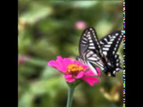 나비리본의 추억(蝶リボンの思い出) / 조용필