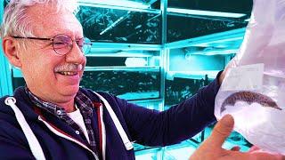 Messerfisch, Flundern Und Co. Im Aquarium Fisch Unboxing 📤