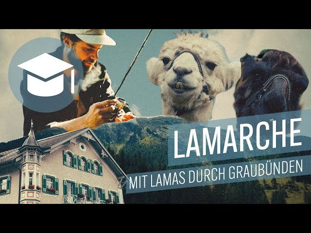 Lamarche mit Lamas durch Graubuenden