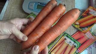 Морковь, обзор натуральных образцов.