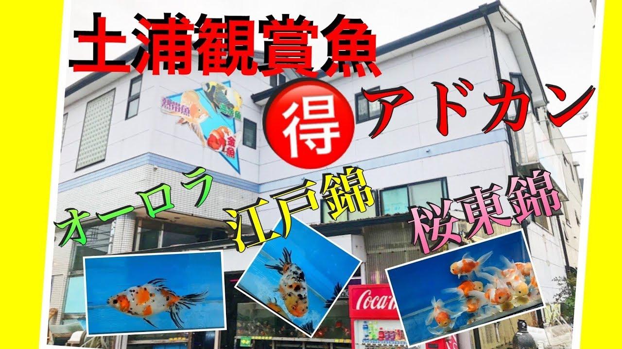 土浦 観賞 魚