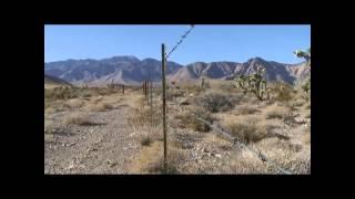 © Ночной Лас Вегас и кактусы в пустыне Аризоны // Night Las Vegas and cacti in the Arizona desert