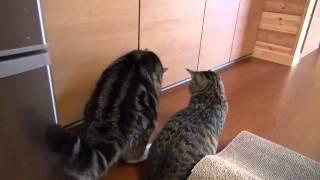 ►►  Взаимопомощь по-кошачьи