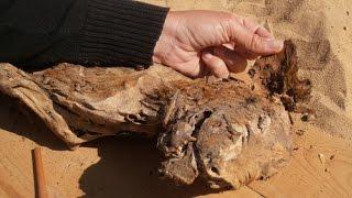 8 Million Dog Mummies Found in Egypt