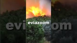 EviaZoom.gr - Εύβοια: Μεγάλη φωτιά στο Κοντοδεσπότι - Μια «ανάσα» από τα σπίτια οι φλόγες! (1)