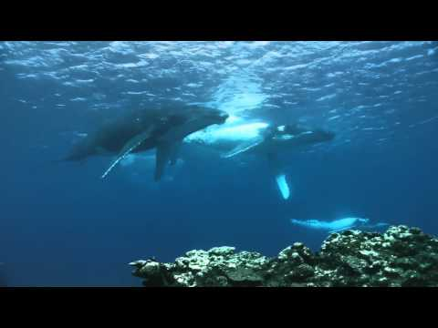 dancing whales