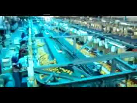Fresh oranges , Packing house , MEDEST for import and export in Egypt..wmv