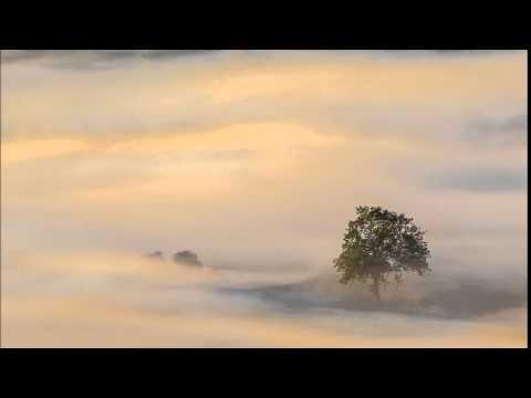 Zen Garden - Calming Sands