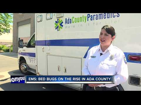 Bed Bugs on the rise in Ada County