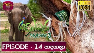 Sobadhara - Sri Lanka Wildlife Documentary | 2019-08-30 | (පාද යාත්‍රා) Padayathra Thumbnail
