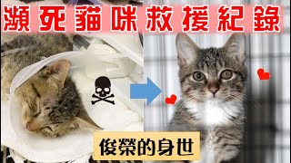【SoybeanMilk_Cat】 Rescue a dying kitten