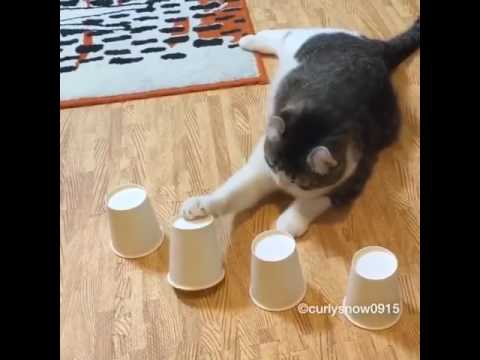 Smart Cat Plays Guessing Game