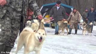 Выставка охотничьих собак в Уфе