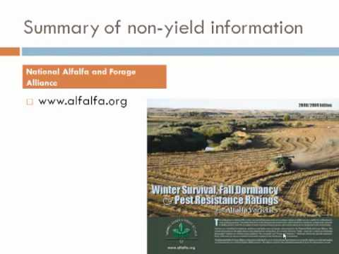 Alfalfa Variety Selection