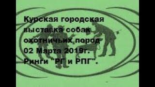 Городская выставка собак охотничьих  пород г.Курск 02.03.2019г. Ринги РГ и РПГ