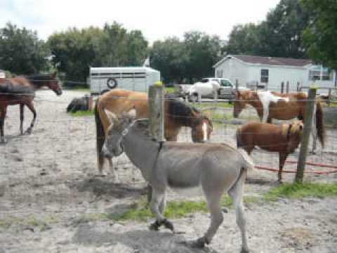 donkey sex videos download