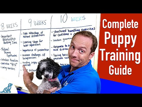 Your Complete Puppy Training Schedule By Age