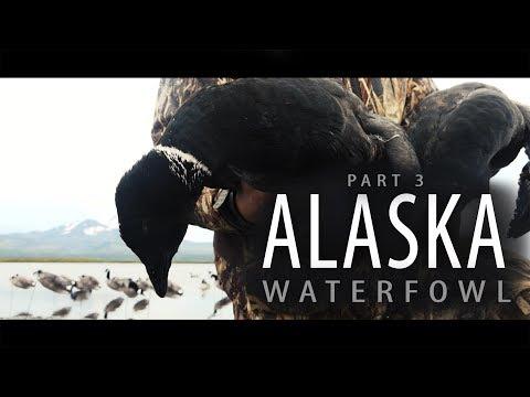 Alaska Adventure: Part 3 | Windsock Decoys On A Loafing Beach
