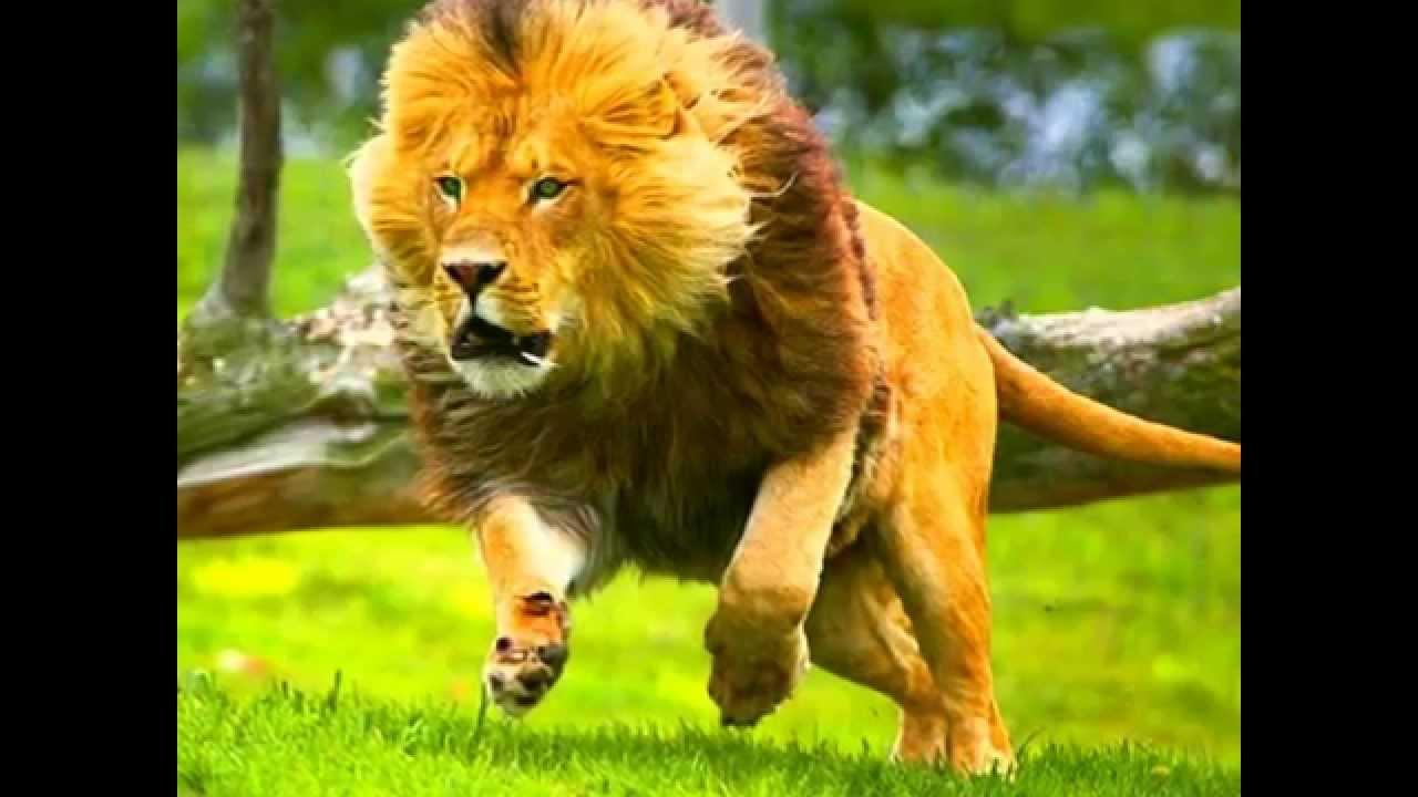 leon corriendo - YouTube