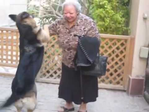 German Shepherd Dog excited when reunited with owner after 1 hour (2)