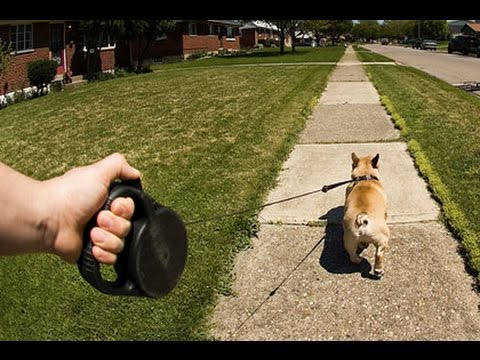 гуляют ночью с собакой во дворе без поводка уходу термобельем достаточно